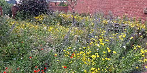 Neu angelegte Blühwiese auf dem Gelände des EBZ