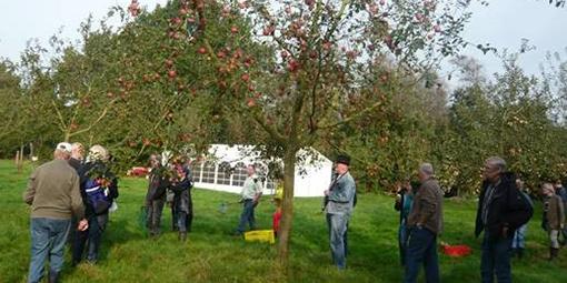 Obstbäume auf einer Streuobstwiese